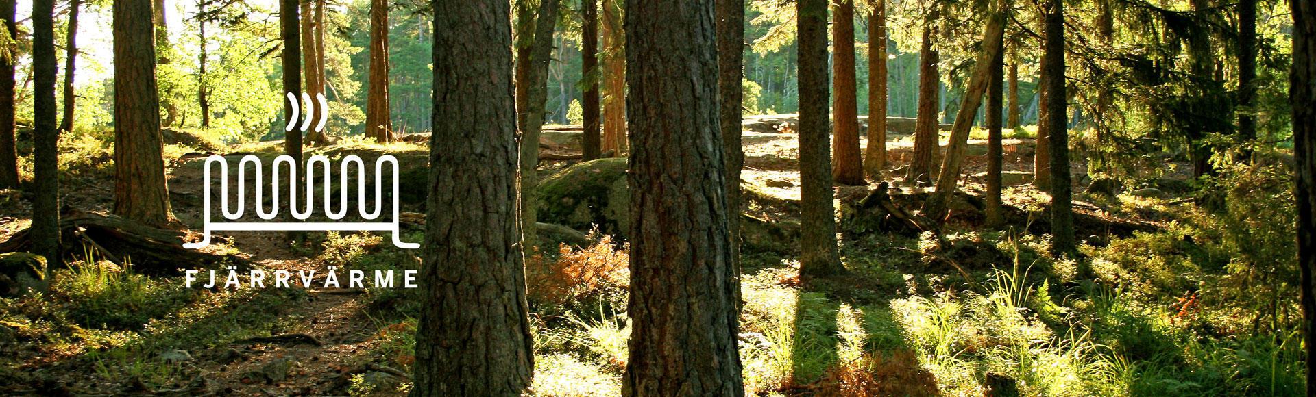 Bild på skog