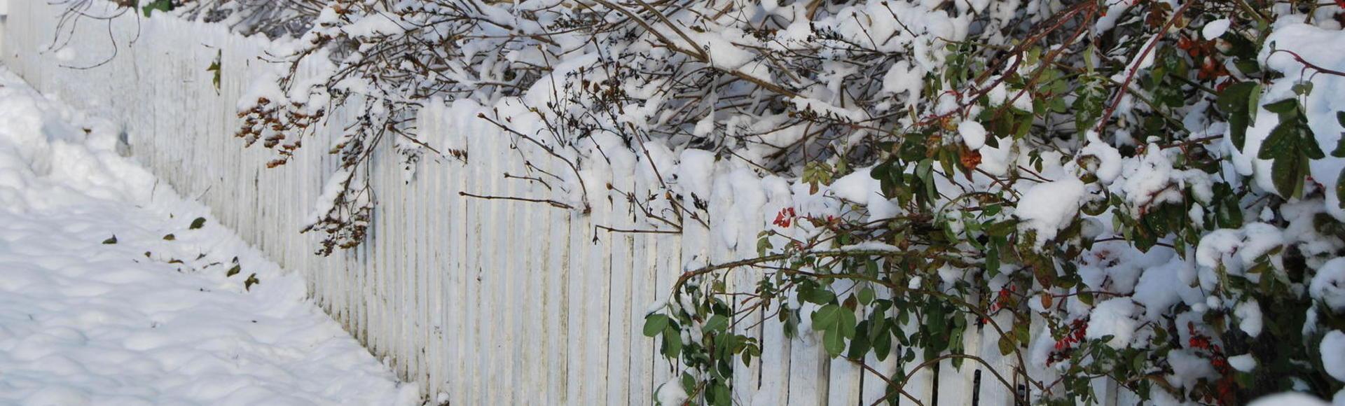 Häck vid staket